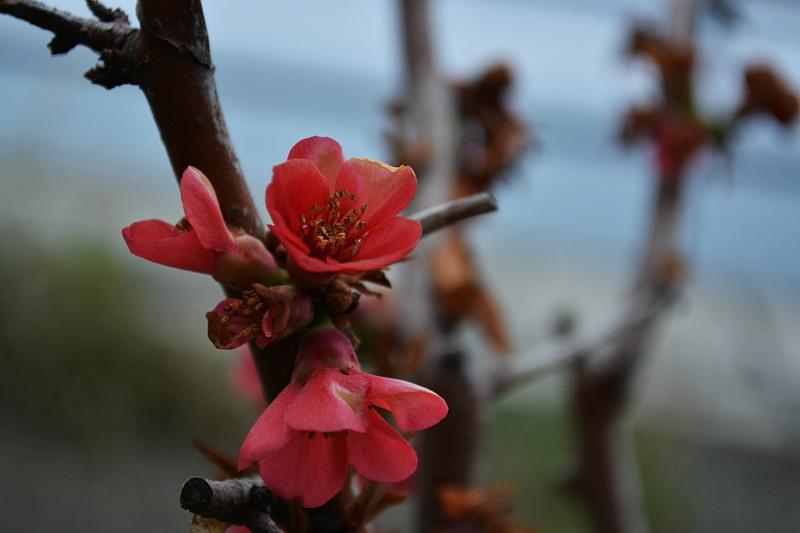 Marine Flower