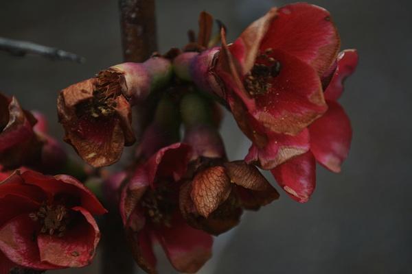 Old Flower by Anastasiya Pryanikova