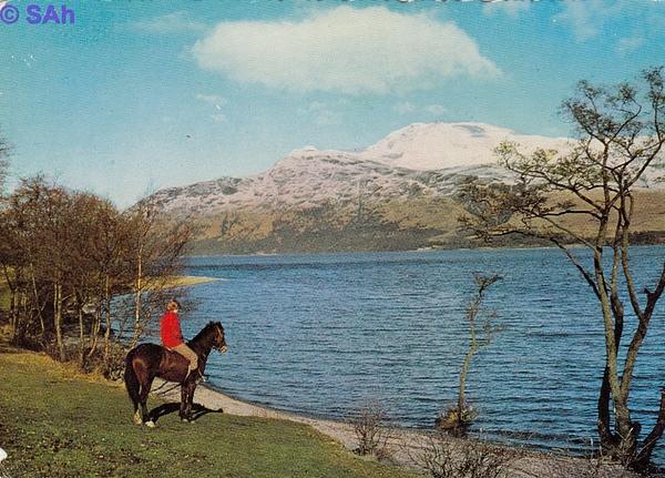 lochlomondhorse by Stuart Alexander Hamilton