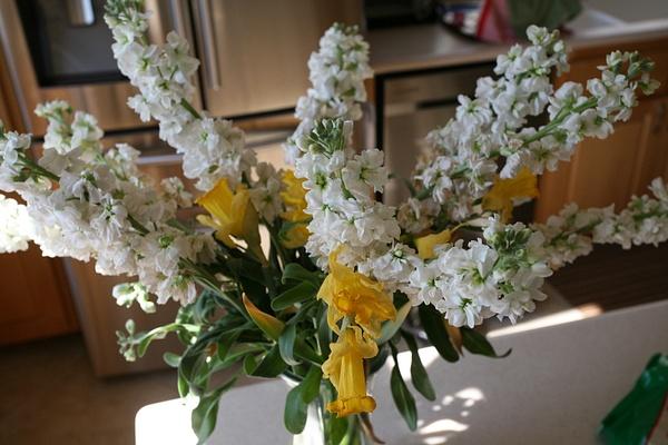 flower by Matthewo6