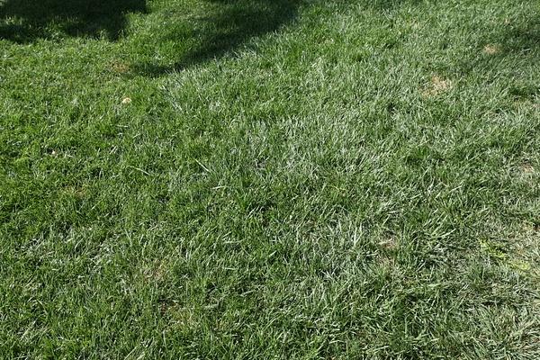 grass by Matthewo6