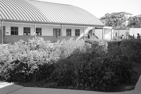 SCHOOL FLOWERS by BlockedOutMafia