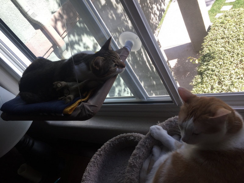 Cats hanging out by the window