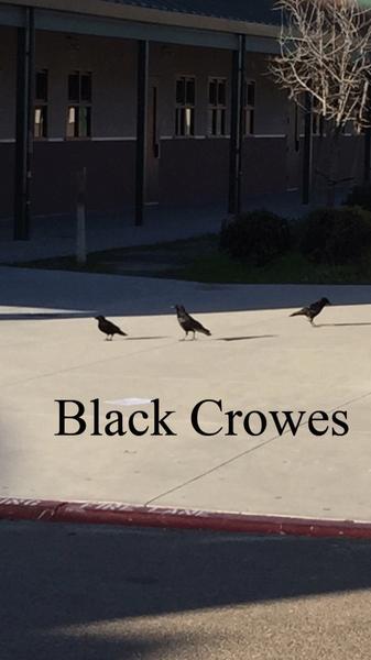 black-crowes by DanielAlva59292