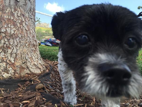 Close up Dog by IsabellaYale