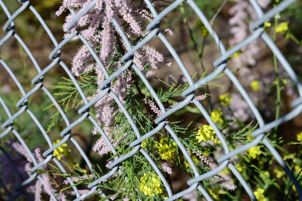 fenced flowers by IsabellaYale