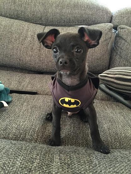 batman by ElizabethChiroque6827