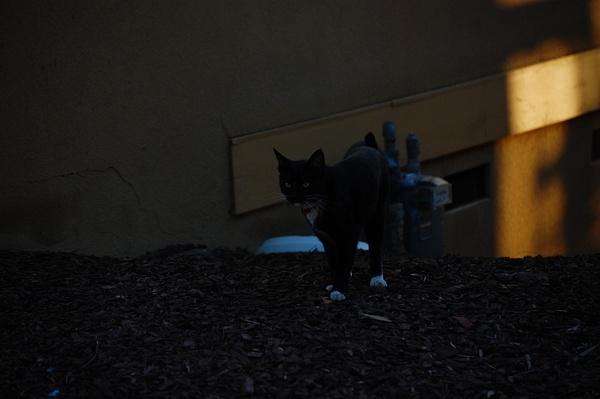 cat by ElizabethChiroque6827