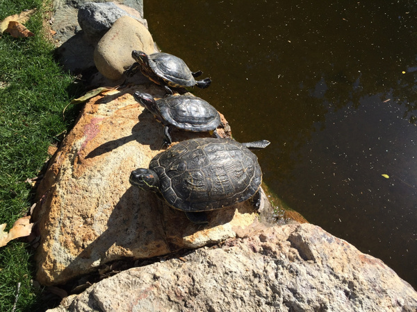 turtles by VanessaFrese