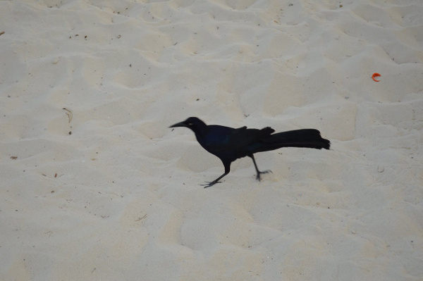 black bird by BriannaIbanezAdvanced
