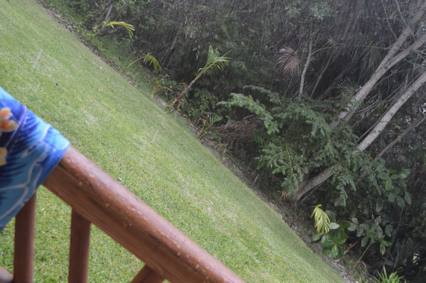 rain by BriannaIbanezAdvanced