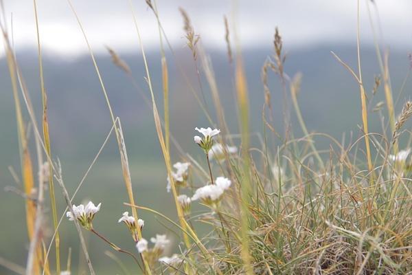 IMG_1191 by Elbrus9