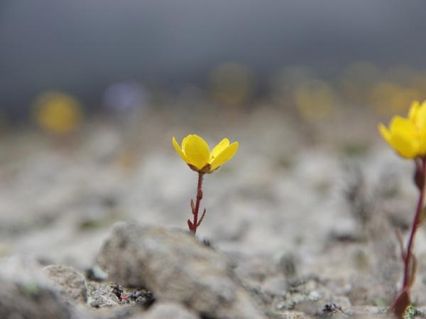 IMG_1247 by Elbrus9