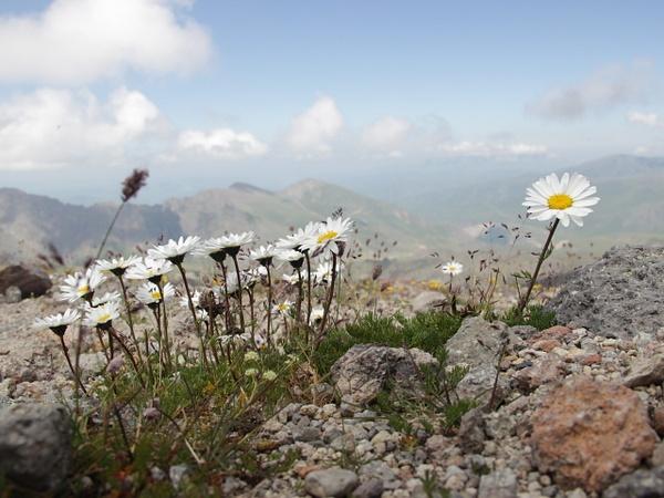 IMG_1262 by Elbrus9