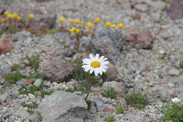 IMG_1266 by Elbrus9