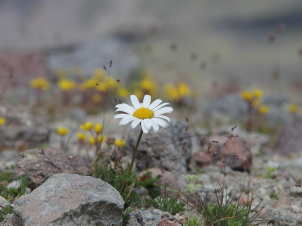 IMG_1267 by Elbrus9