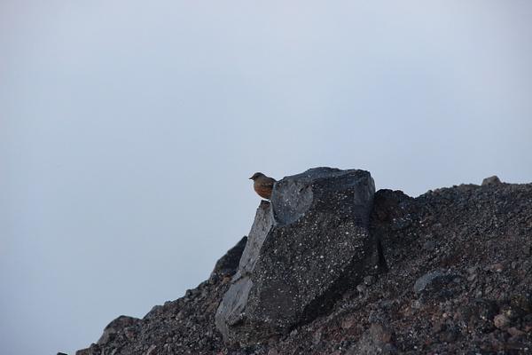 IMG_1558 by Elbrus9