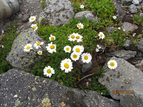 IMG_2570 by Elbrus9
