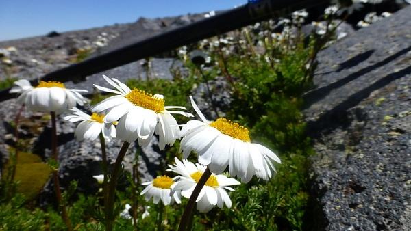 P1080164 by Elbrus9