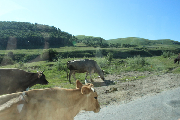 IMG_6839 by Elbrus9