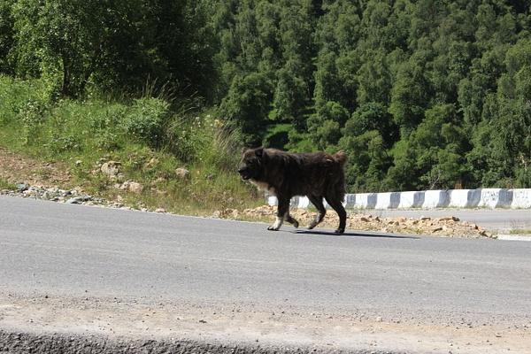 IMG_6879 by Elbrus9