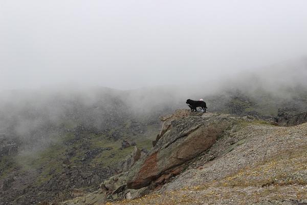 IMG_7002 by Elbrus9