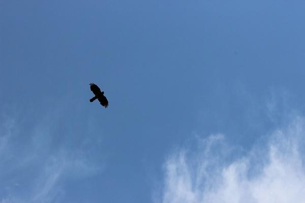 IMG_7214 by Elbrus9