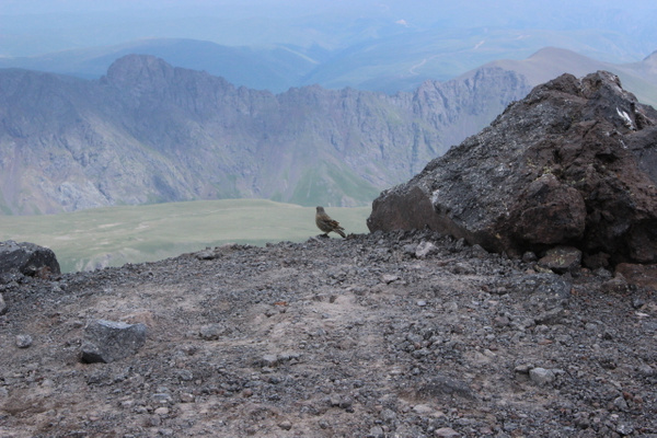 IMG_7228 by Elbrus9