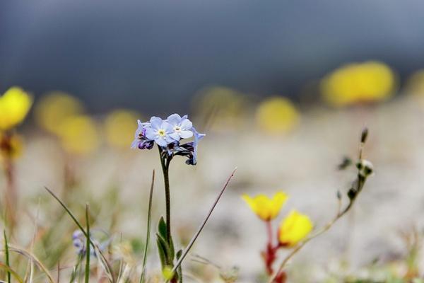 IMG_1246 by Elbrus9