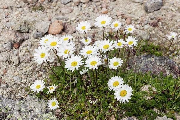 IMG_1265 by Elbrus9
