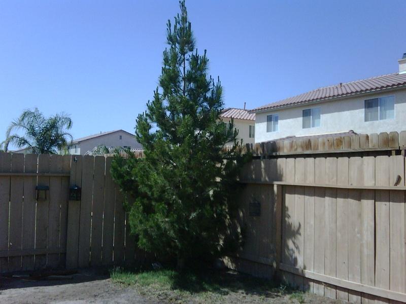 One proud little tree