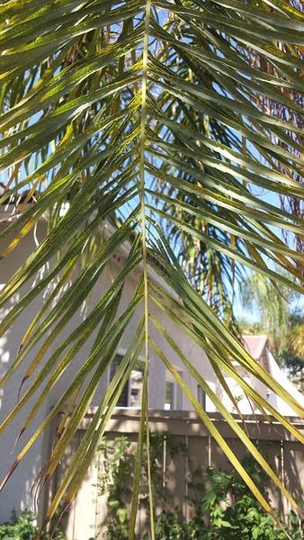 Palm leaf by Jose Martinez