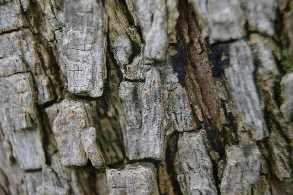 Close up of a tree by Jose Martinez