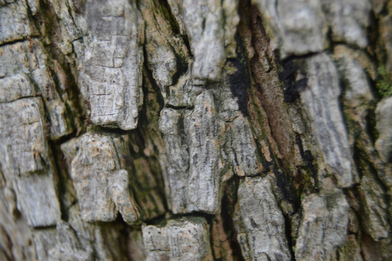 Close up of a tree
