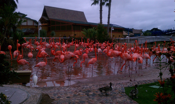 Flamingos by Jose Martinez
