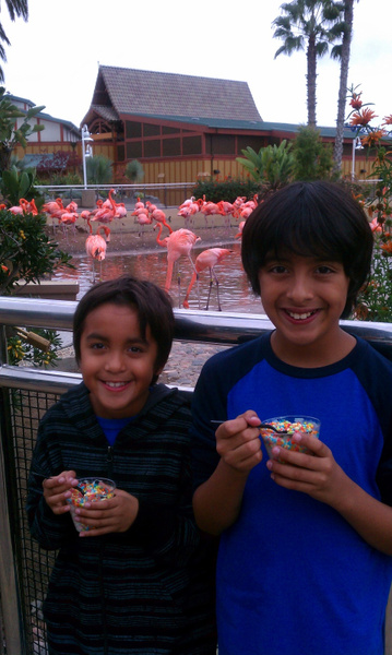 My brothers and flamingos by Jose Martinez