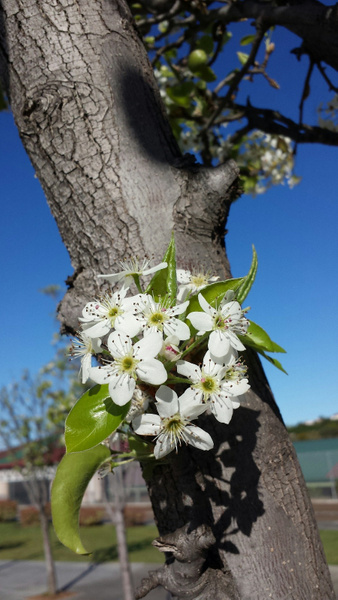 Flower 8 by Jose Martinez