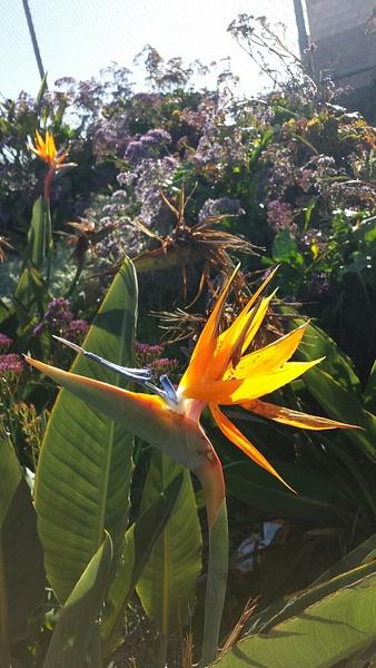 Flower 7 by Jose Martinez