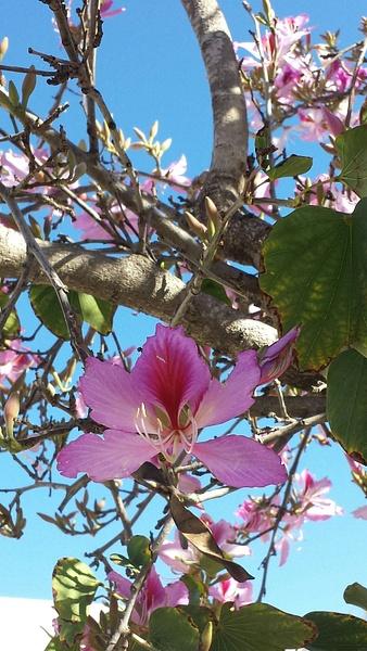 Flower 6 by Jose Martinez