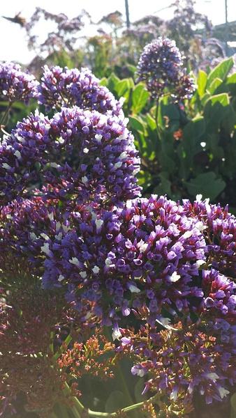 Flower 5 by Jose Martinez