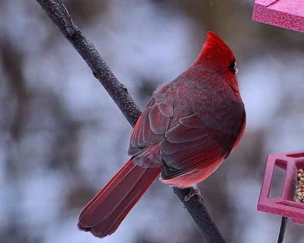 Birds by Steve Hollar