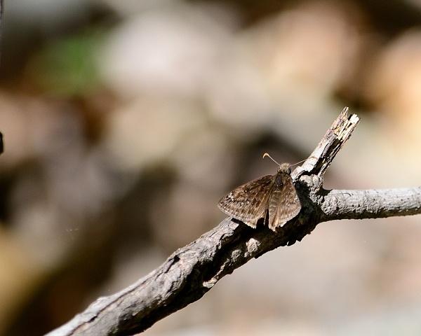 Butterflies & Moths by Steve Hollar