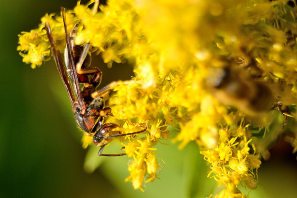 Insects by Steve Hollar