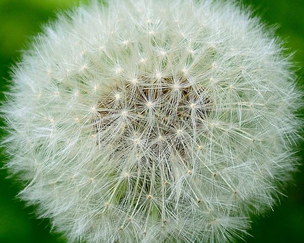 Seeds & Pods by Steve Hollar