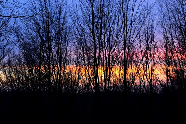 Sunsets by Steve Hollar