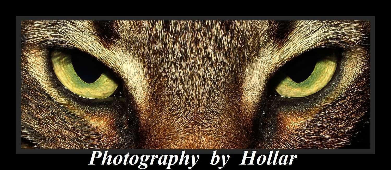 Steve Hollar's Gallery