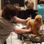 pet grooming school |(954) 771-4030|