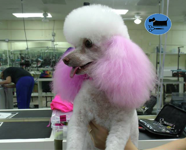 pet grooming school |(954) 771-4030|