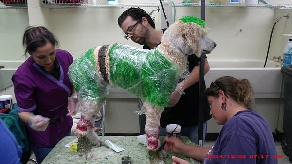 pet grooming school |(954) 771-4030| by...