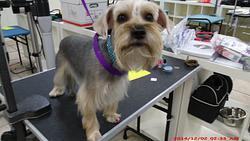 Merryfield School of Pet Grooming |(954) 771-4030